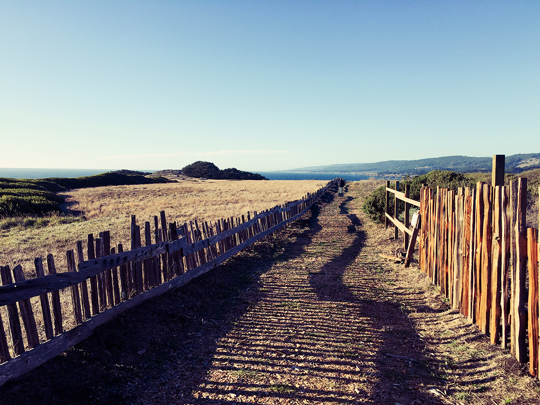 sea_ranch_fence